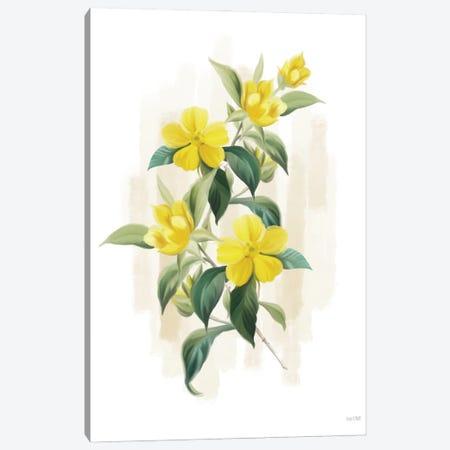 Goldilocks II Canvas Print #HFE110} by House Fenway Canvas Art