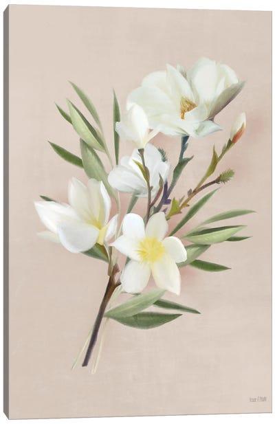 Spring Magnolias Canvas Art Print