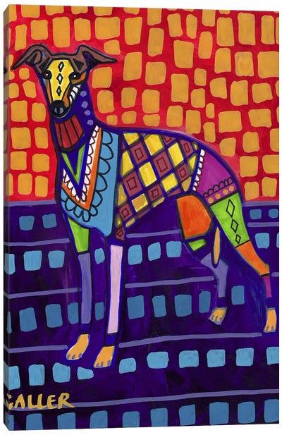 Greyhound Whip Canvas Print #HGL32
