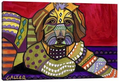 Aussiedooodle  Canvas Print #HGL59