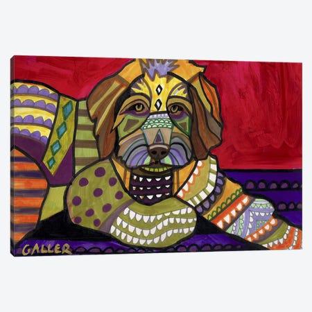 Aussiedooodle  Canvas Print #HGL59} by Heather Galler Canvas Art