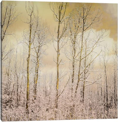 Golden Winter Forest I Canvas Art Print