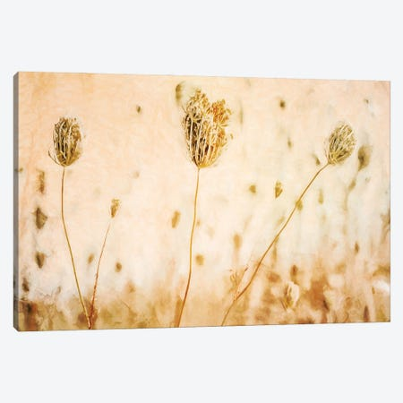 Queen Annes_Lace In Autumn Canvas Print #HHL32} by Halli Hal Canvas Wall Art