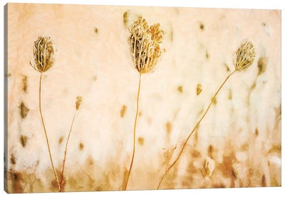 Queen Annes_Lace In Autumn Canvas Art Print