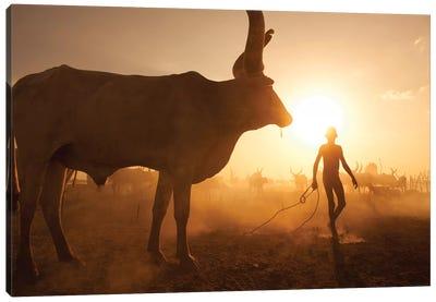 Saving The Cows Canvas Art Print