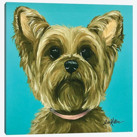 Yorkie On Aqua Canvas Print #HHS124} by Hippie Hound Studios Canvas Artwork