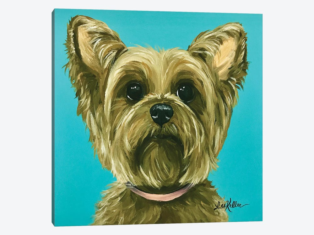 Yorkie On Aqua by Hippie Hound Studios 1-piece Canvas Art