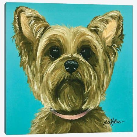 Yorkie On Aqua Canvas Print #HHS124} by Hippie Hound Studios Canvas Artwork
