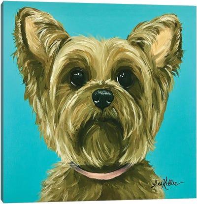 Yorkie On Aqua Canvas Art Print