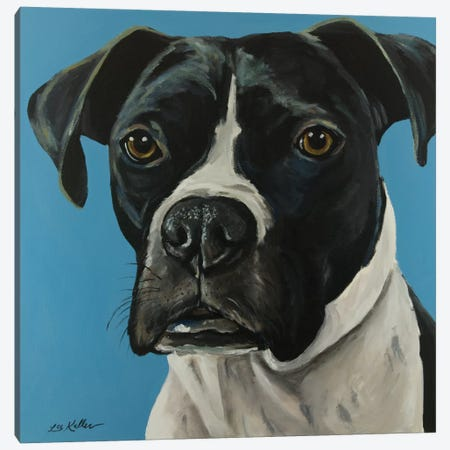Black Boxer Canvas Print #HHS129} by Hippie Hound Studios Art Print