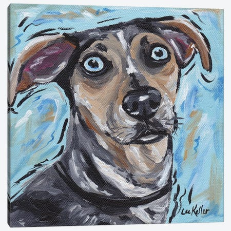 Catahoula Canvas Print #HHS12} by Hippie Hound Studios Canvas Print