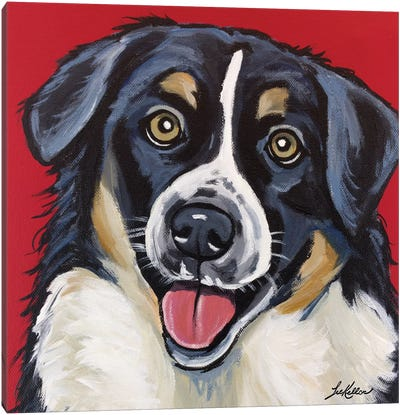 Border Collie, Square Canvas Art Print