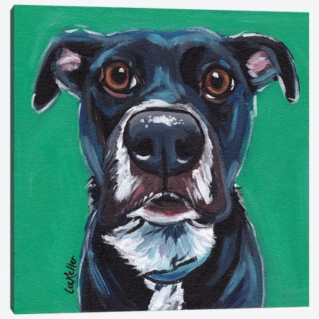 Expressive Black Dog On Emerald Canvas Print #HHS138} by Hippie Hound Studios Canvas Wall Art