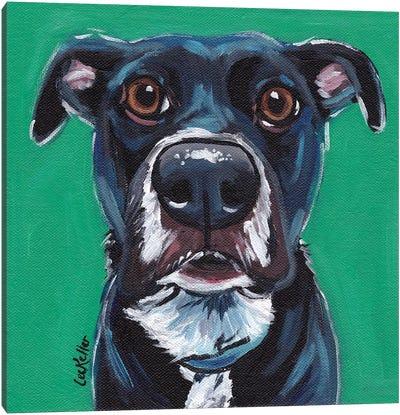 Expressive Black Dog On Emerald Canvas Art Print