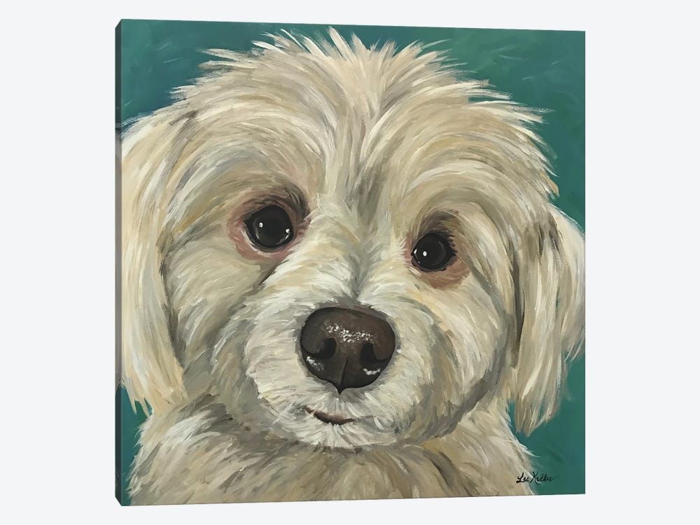 Charlie The Maltese Mix 1-piece Canvas Artwork
