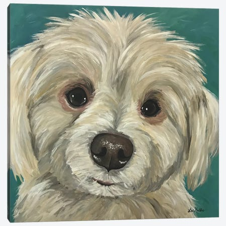 Charlie The Maltese Mix 3-Piece Canvas #HHS13} by Hippie Hound Studios Art Print