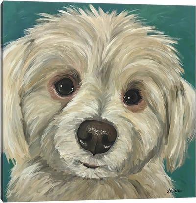 Charlie The Maltese Mix Canvas Art Print