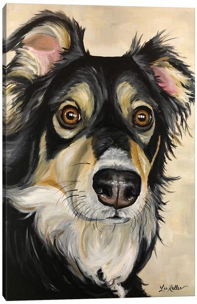 Australian Shepherd Sophie Canvas Art Print