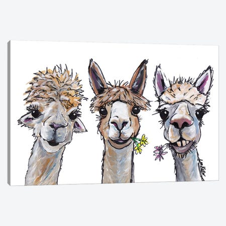 Alpacas Trio II Canvas Print #HHS173} by Hippie Hound Studios Canvas Art