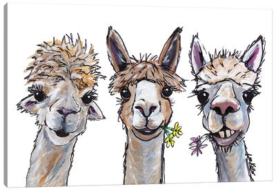 Alpacas Trio II Canvas Art Print
