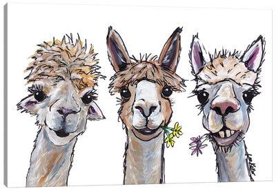Alpacas Trio II Canvas Art Print