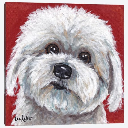 Coton de Tulear Canvas Print #HHS17} by Hippie Hound Studios Canvas Artwork