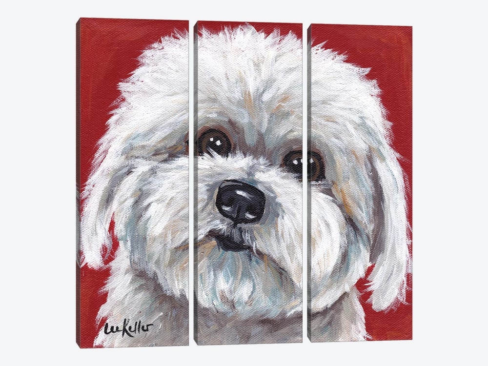 Coton de Tulear by Hippie Hound Studios 3-piece Canvas Art