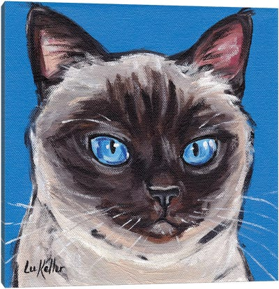 Cat Siamese On Blue Canvas Art Print