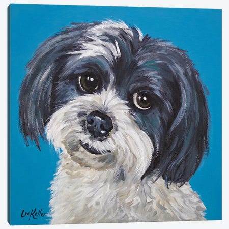 Maltese Shihtzu Mix - Maggie Canvas Print #HHS206} by Hippie Hound Studios Canvas Print