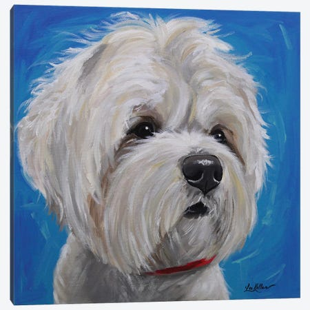 Maltese Shihtzu Mix - Pipa Canvas Print #HHS207} by Hippie Hound Studios Canvas Print