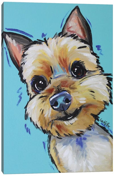 Yorkie - Jaxson Canvas Art Print