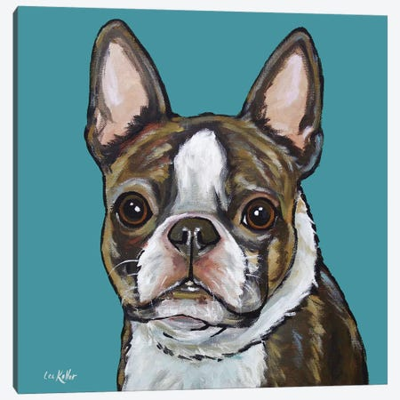 Boston Terrier - Sasha On Teal Canvas Print #HHS241} by Hippie Hound Studios Canvas Art