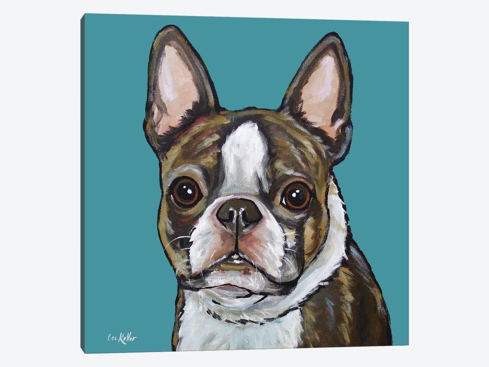 Boston Terrier - Sasha On Teal by Hippie Hound Studios 1-piece Art Print