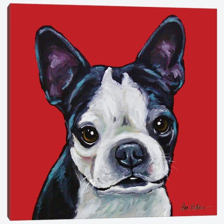 Boston Terrier - Sophie On Red Canvas Print #HHS242} by Hippie Hound Studios Canvas Artwork