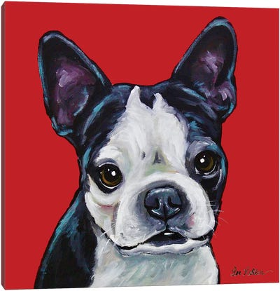 Boston Terrier - Sophie On Red Canvas Art Print