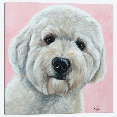 Labradoodle On Pink Canvas Print #HHS258} by Hippie Hound Studios Canvas Art Print