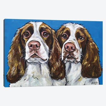 Springer Spaniels Canvas Print #HHS263} by Hippie Hound Studios Canvas Artwork