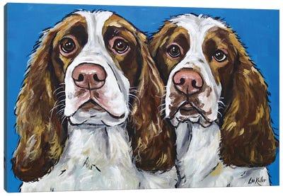 Springer Spaniels Canvas Art Print