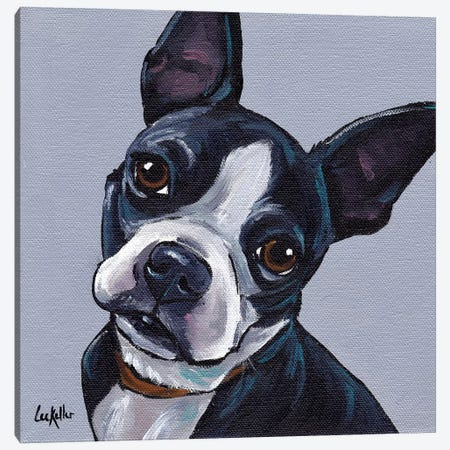 Boston Terrier On Gray Canvas Print #HHS271} by Hippie Hound Studios Canvas Art Print