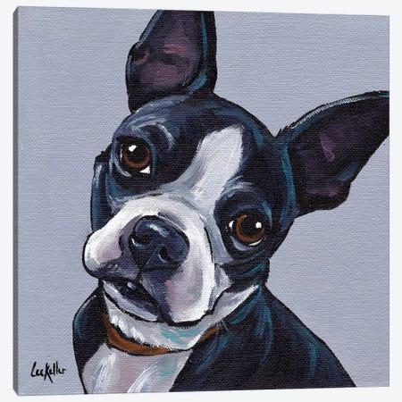 Boston Terrier On Gray Canvas Print #HHS271} by Hippie Hound Studios Canvas Art Print