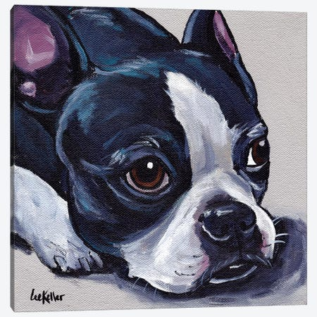 Boston Terrier On Tan Canvas Print #HHS272} by Hippie Hound Studios Canvas Print
