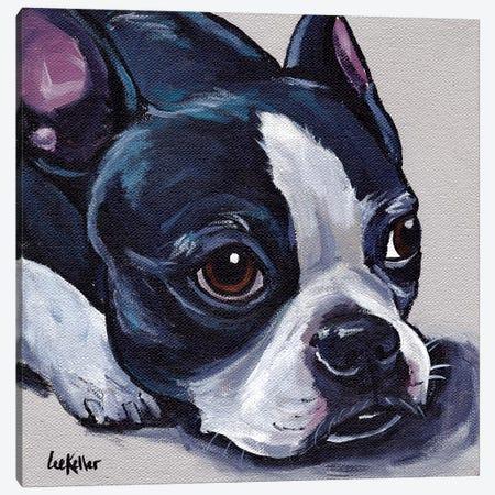 Boston Terrier On Tan Canvas Print #HHS272} by Hippie Hound Studios Canvas Print
