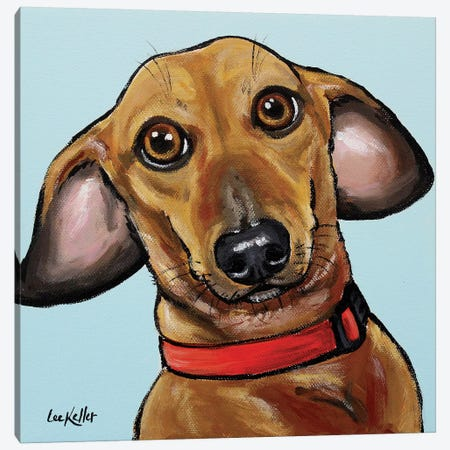 Dachshund On Turquoise Canvas Print #HHS280} by Hippie Hound Studios Canvas Wall Art