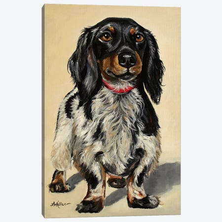 Finn The Long-Haired Dachshund Canvas Print #HHS281} by Hippie Hound Studios Canvas Artwork