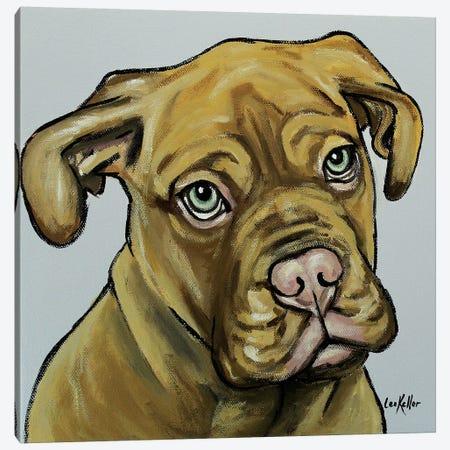 French Mastiff Canvas Print #HHS282} by Hippie Hound Studios Canvas Artwork