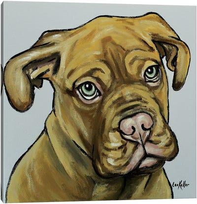 French Mastiff Canvas Art Print