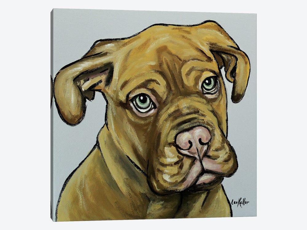French Mastiff by Hippie Hound Studios 1-piece Canvas Artwork