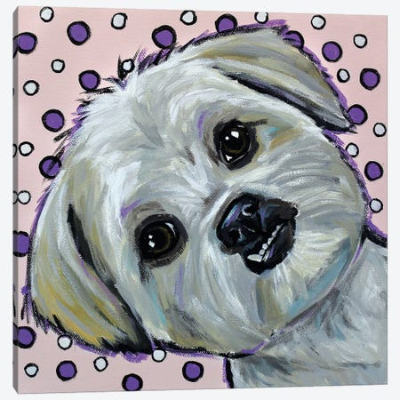 Shih Tzu On Polka Dots Canvas Print #HHS308} by Hippie Hound Studios Art Print