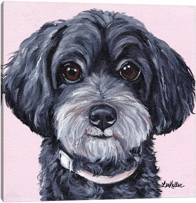 Yorkiepoo On Pink Canvas Art Print