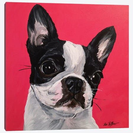 Boston Terrier Rebecca Canvas Print #HHS354} by Hippie Hound Studios Canvas Print